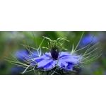 Pure Black Seed Oil - Nigella Sativa 110ml / 3.72 fl oz