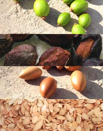 argan tree nuts, fruits, husks and nut kernels