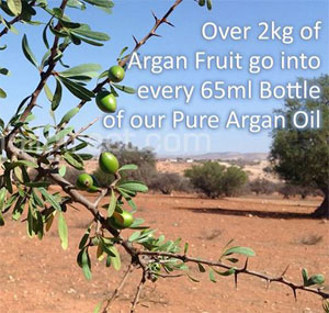 Argan Fruit on the Tree