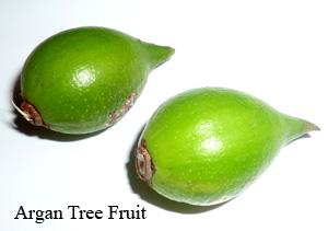 argan-tree-fruit