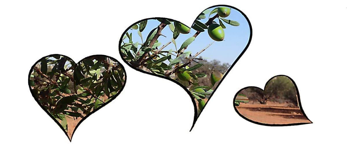 heart shapes with argan tree background