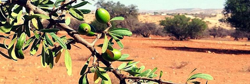 argan oil nutrition diet information