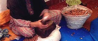 moroccan berber women argan oil cooperatives