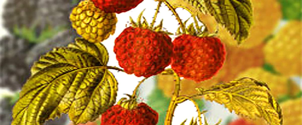 red raspberry and carrot seed oil sunscreen spf