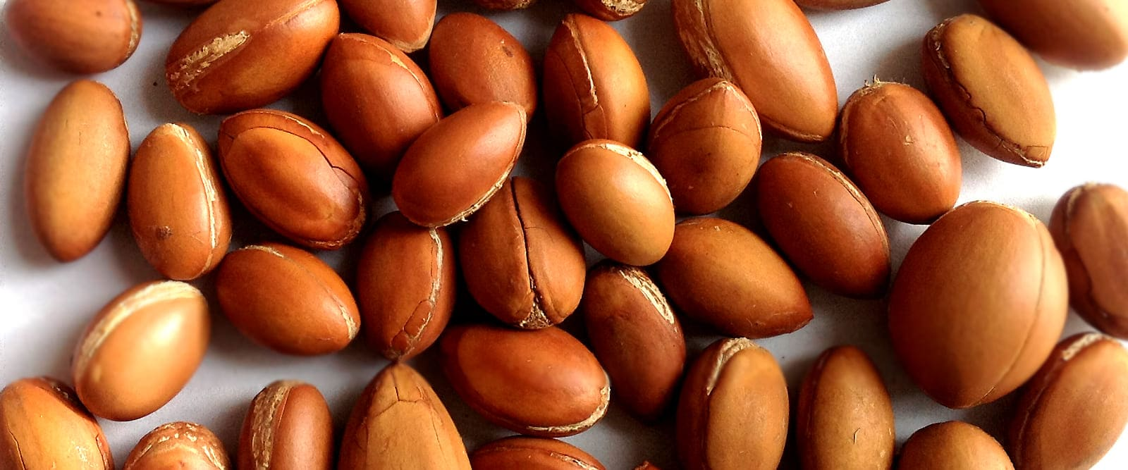 The Four Stages of Argan Nut Processing