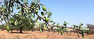 image link to article about production of argan oil
