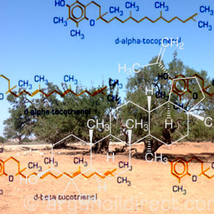 The chemistry of Argan Oil